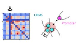 Study on cis-regulatory chromatin loops